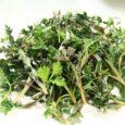 Wer sich mit Gesundheit und Ernährung und dabei auch mit Heilpflanzen auseinandersetzt, dem begegnet seit einiger Zeit häufiger der Einjährige Beifuss. Die Pflanze mit dem lateinischen Namen 'Artemisia Annua' hat […]